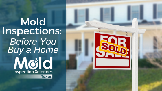 Mold Inspections: Before You Buy a Home