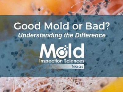 Good Mold Vs Bad